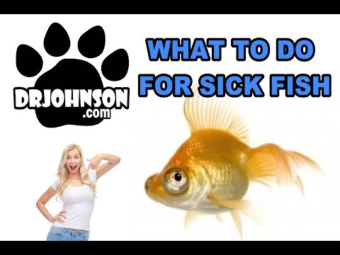 My Fish Are Sick What Should I Do?