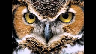 Download Самокодировки «Создание образа совершенства» Video
