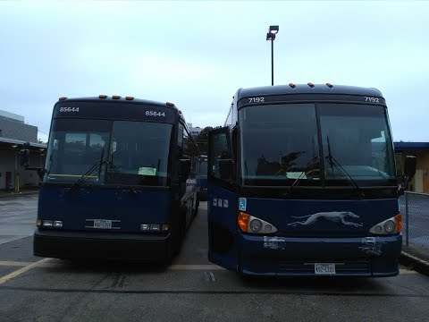 Why GREYHOUND BUS Has No Real COMPETITION | What This Means For Customers