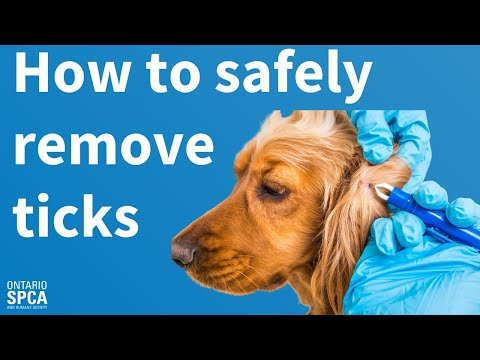 How to safely remove ticks from your dog