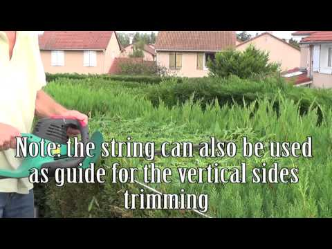 How to trim/cut a hedge straight