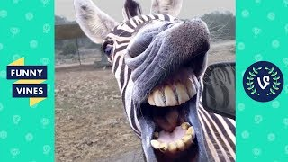 Download TRY NOT TO LAUGH - BAD DAY?? WATCH THESE FUNNY ANIMALS! Video