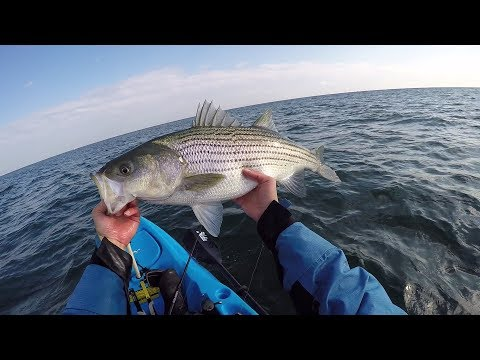 Fall Fatty. Fishing the Ocean Front for Striped Bass. New Jersey Fall 2017