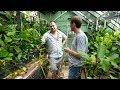 старый аквариумист питомник аквариумных растений в москве Song mp3
