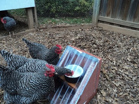 Solar Heated Chicken Waterer