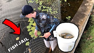 Relocating INVASIVE FISH Into Homemade POND JAIL! (CRAZY)