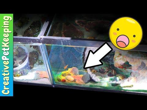 🌈 Double Rainbow in my FISH TANK !!!
