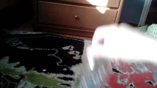 Έκανα[bottle flip]με μία προσπάθεια
