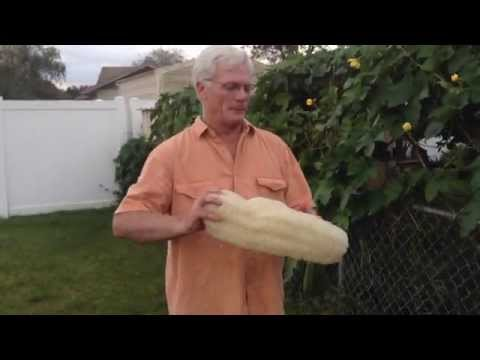 Growing Luffa (loofah) Sponges - Useful Plants