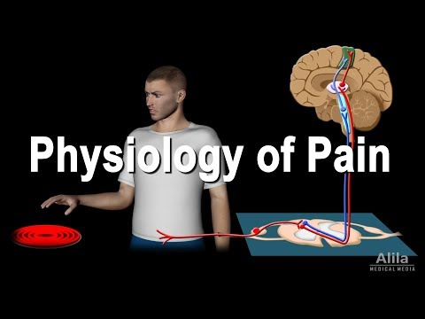 Physiology of Pain, Animation.