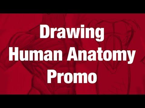Figure Drawing Tutorial - Drawing Human Anatomy Promo