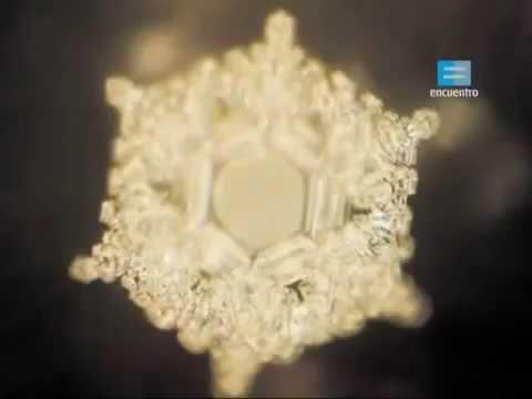 El microscopio un modo de conocer (extracto)- INTRODUCCIÓN A LA CÉLULA