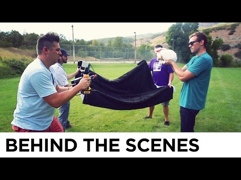 Flying Kittens vs. Flying Puppies - Behind the Scenes