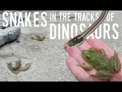 Herping in the Footsteps of DINOSAURS | Exploring the South San Gabriel River