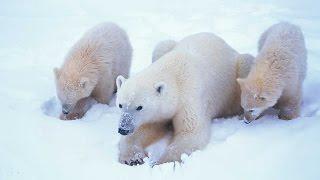 Grandes documentales - El mundo polar
