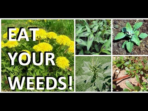 5 Weeds in Every Garden That are Actually Edible & Delicious!