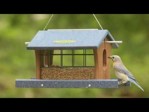 Bird Safe® Extreme Bluebird Feeder 4671