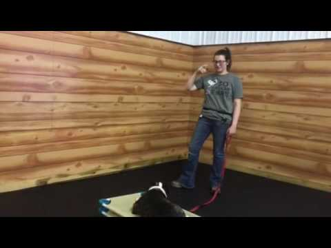 Fighting dogs in same household reunited in training