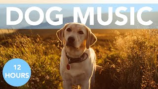 ASMR MUSIC FOR DOGS! Calm Your Anxious Dog in Minutes! NEW!