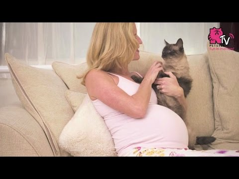Does keeping a cat actually affect your pregnancy?