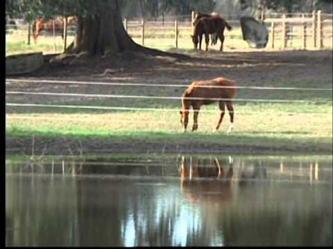 Installing your ElectroBraid® Horse Fence