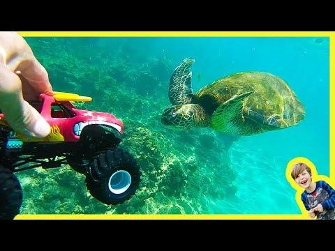 MONSTER TRUCKS SWiM with SEA TURTLES EELS and BOOGERS?!?
