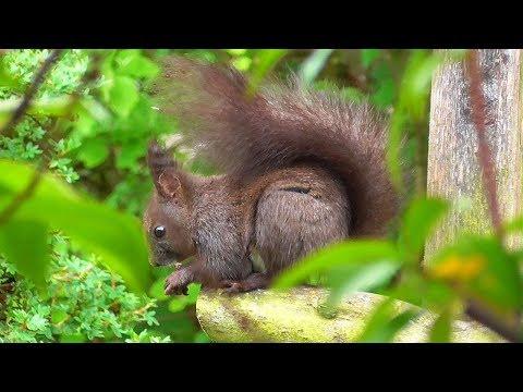 Sweet Squirrels in my garden