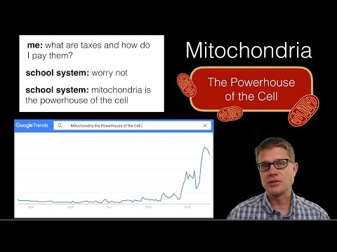 Mitochondria: The Powerhouse of the Cell