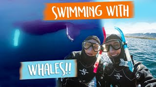 Download SNORKELLING with HUMPBACK WHALES in Iceland 😱😍 Video