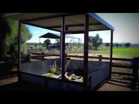 BEST Outdoor Bearded Dragon Enclosure