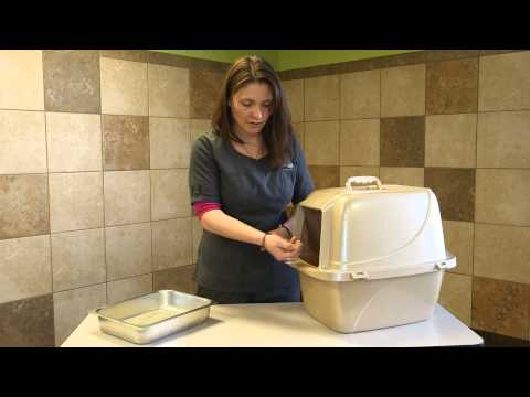 How to Make Indoor Cats & Outdoor Cats Use a Litter Box : Here Kitty, Kitty
