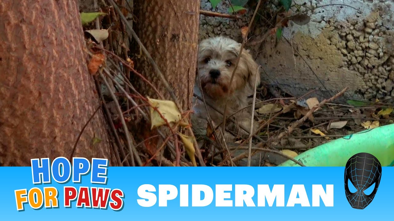 Abandoned dog surrounded by spiders and rescuers 🕷️🕷️🕷️🕷️🕷️