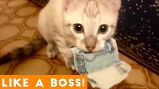 Like a Boss Ultimate Smart Animal Compilation   Funny Pet Videos!