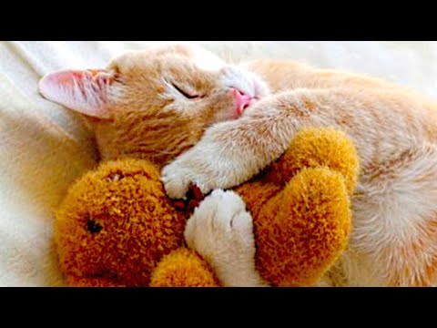 Cute Cats Really Love Stuffed Toys Compilation