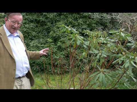 Honey fungus - Burncoose Nurseries