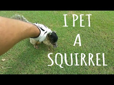 I Got to PET a giant FOX SQUIRREL While Golfing So cool!