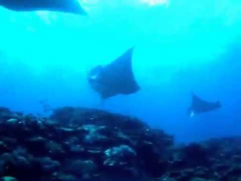 Scuba Diving - 石垣島・マンタ大爆発