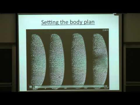 ASC 2012 | Prof. Benjamin Geiger | How do living cells sense the environment?