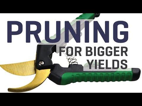 Pruning Tactics for Bigger Yields Indoors