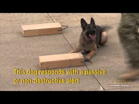 Police Dog Demonstration Drug Sniffing