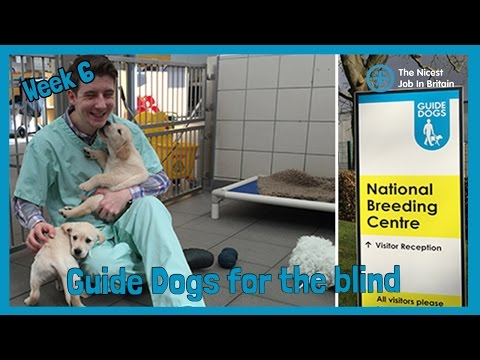 Week 6 - Guide Dogs for the Blind | NJIB