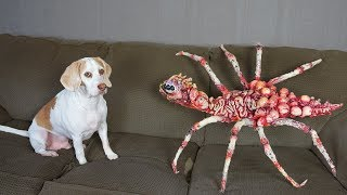 Dog vs Giant Spider Prank! Funny Dogs Maymo & Potpie