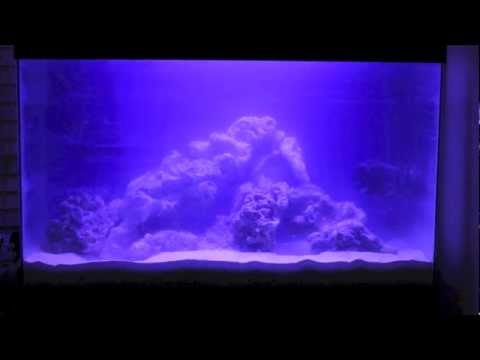 Time-lapse of Cloudy Fish Tank Water Clearing