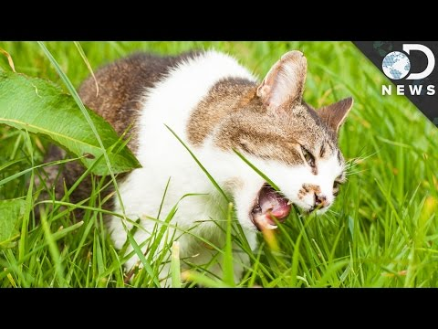 Why Do Dogs And Cats Eat Grass?
