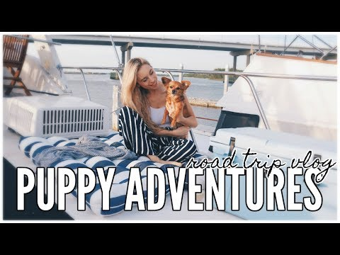 Spring Beach Road Trip | PUPPY ADVENTURES EP 1