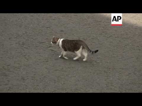 Downing Street cat to remain after Cameron