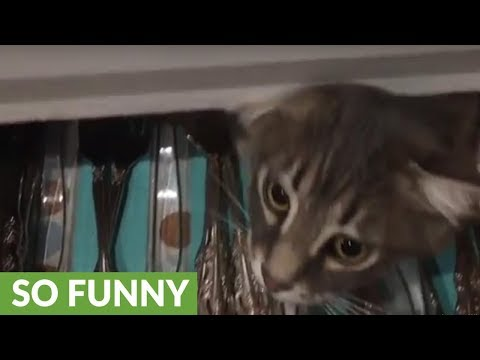 Cat discovered playing inside silverware drawer