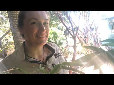 Why I love Auckland Zoo - Primate keeper Katie