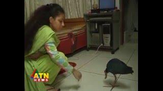 Wildlife News Of Bangladesh---kalim Bird