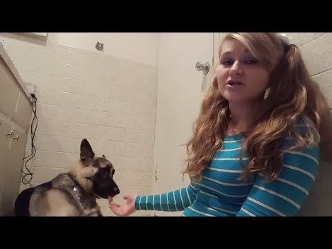 Xxx Mp4 MEET THE YOUTUBER THAT HAS S X WITH HER DOGS 3gp Sex